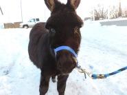 Jip, my mini donkey from Alberta...